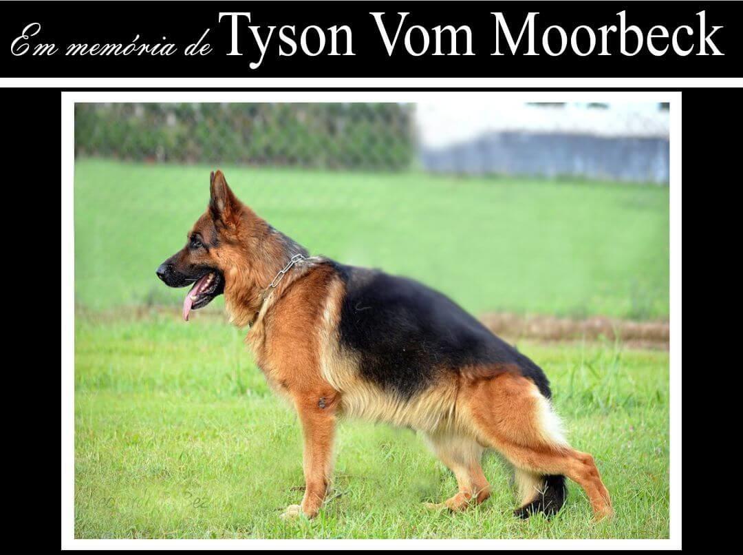 Tyson Vom Moorbeck